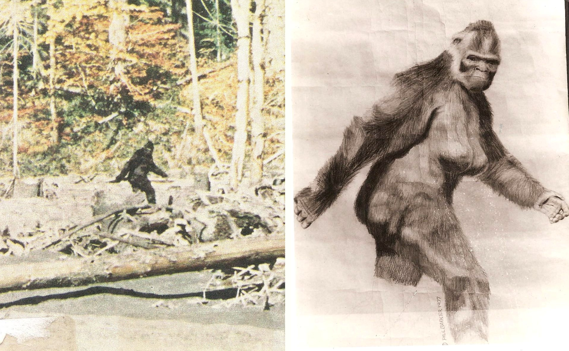 1916x1182 Sketch Of Bigfoot Sasquatch Film Image Paul Barker Googleplex Murals