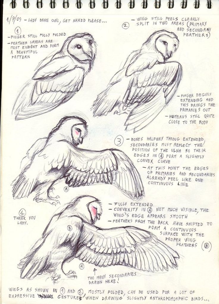 Bird Anatomy Drawing at GetDrawings.com | Free for personal use Bird ...