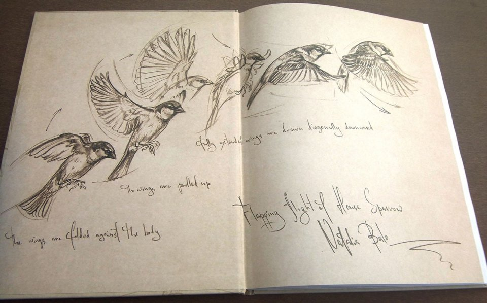 960x597 Bird Anatomy For Artists Natalia Balo, Penny Olsen Nhbs Book Shop