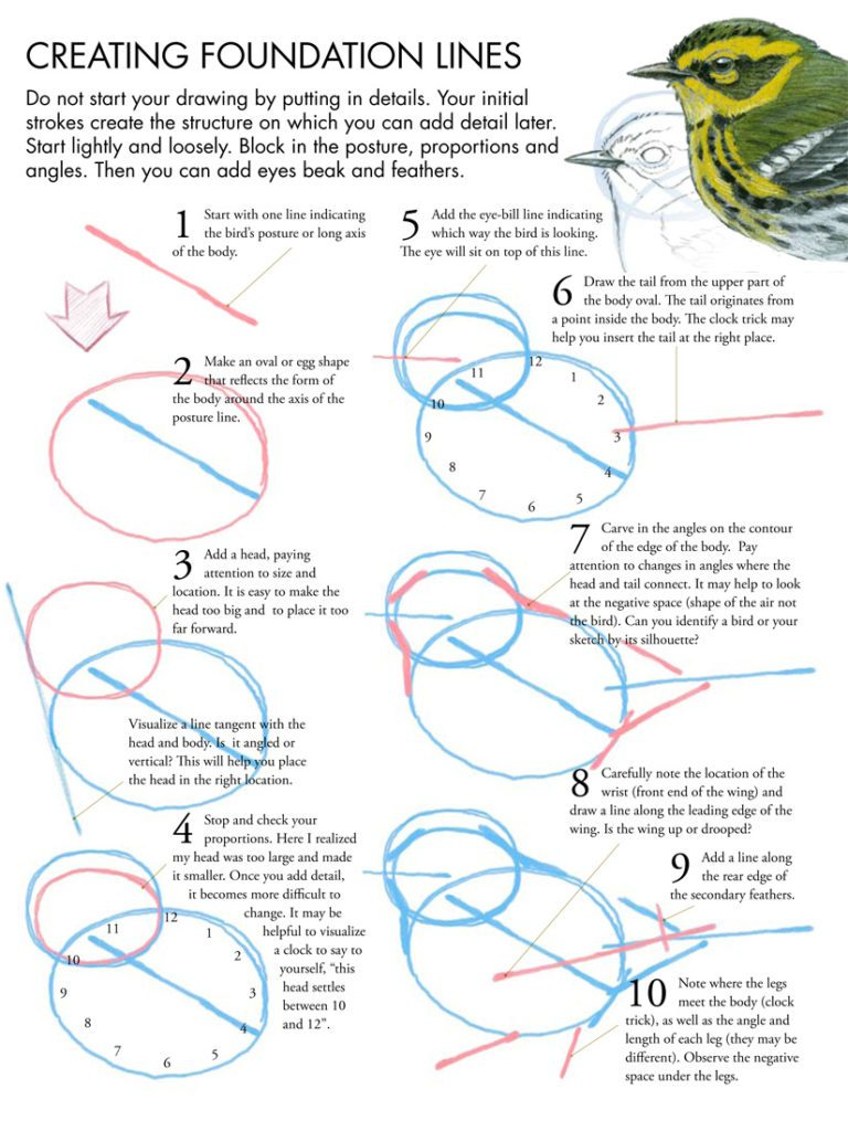768x1024 Drawing Birds Tutorial