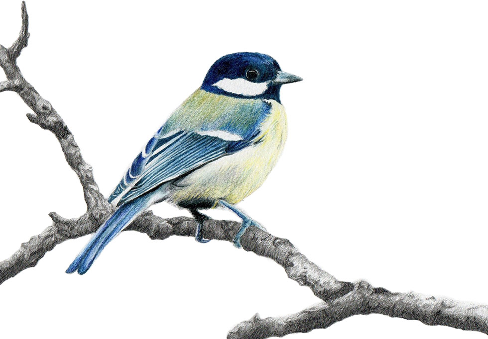 980x682 25 Beautiful Bird Drawings and Artworks from around the world