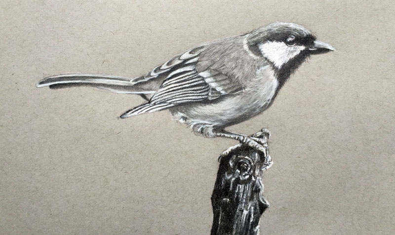 800x476 Draw a Realistic Bird with Graphite and Charcoal Pencil