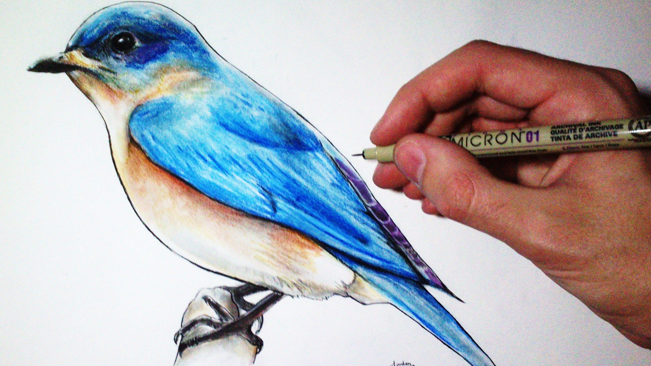 2113x1188 Drawing Time Lapse Blue Bird