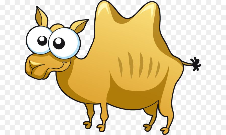 900x540 Bactrian Camel Drawing