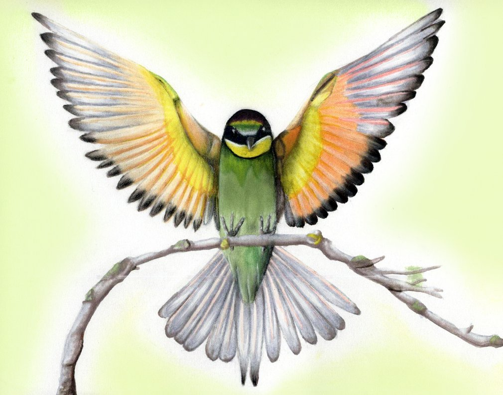 1010x792 Fly Away Teen Artphoto About Animals, Realistic, Bird, Fly