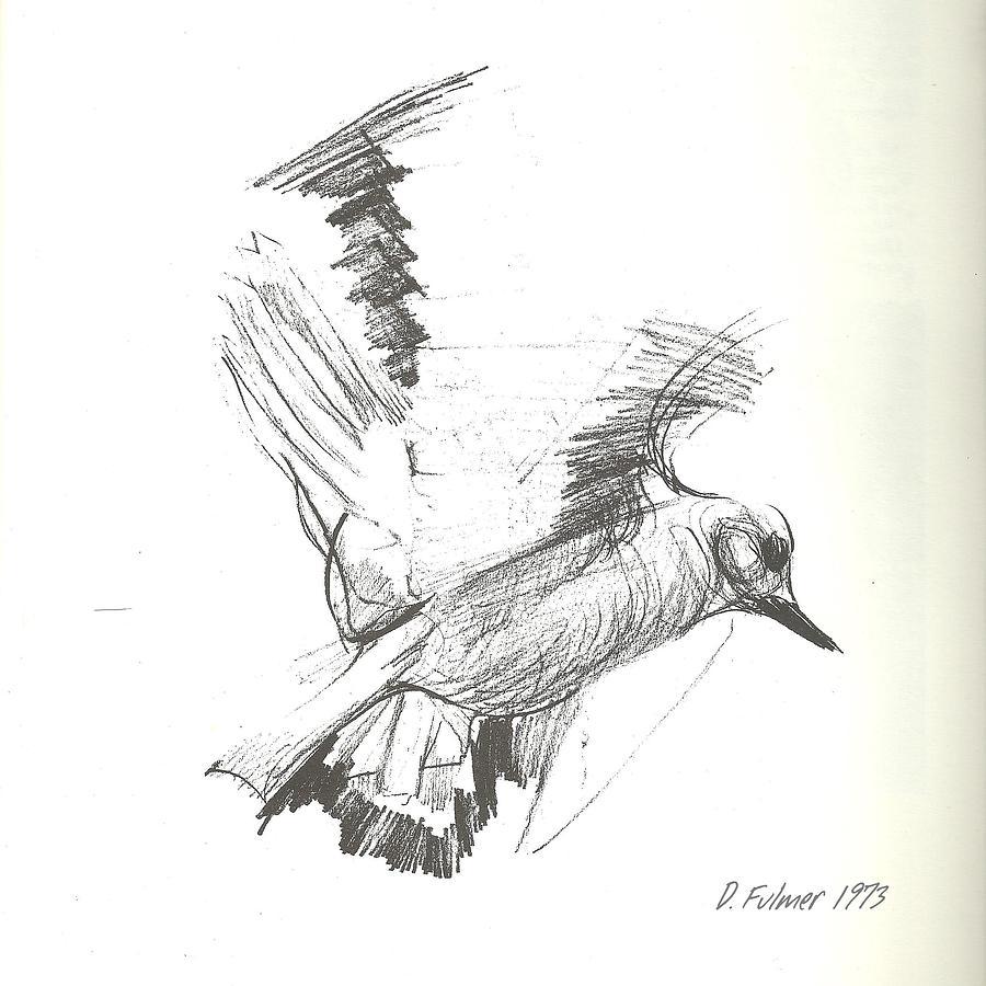 900x900 Flying Bird Sketch Drawing By Denise Fulmer