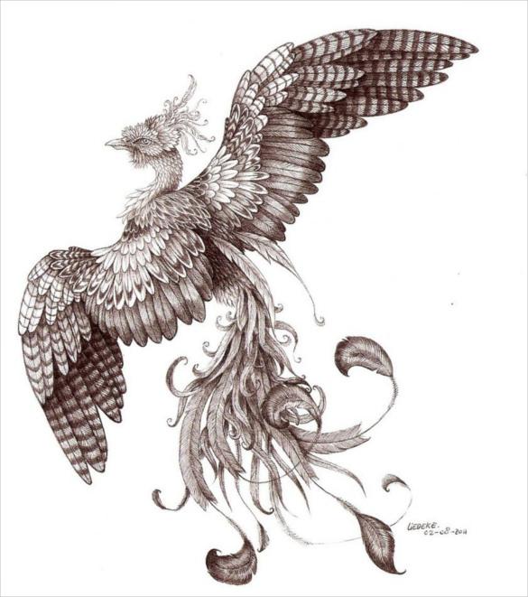 585x661 Mind Blowing Phoenix Bird Art Drawings Free Amp Premium Templates