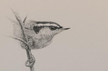 355x236 Drawing Demonstration A Bird's Eye