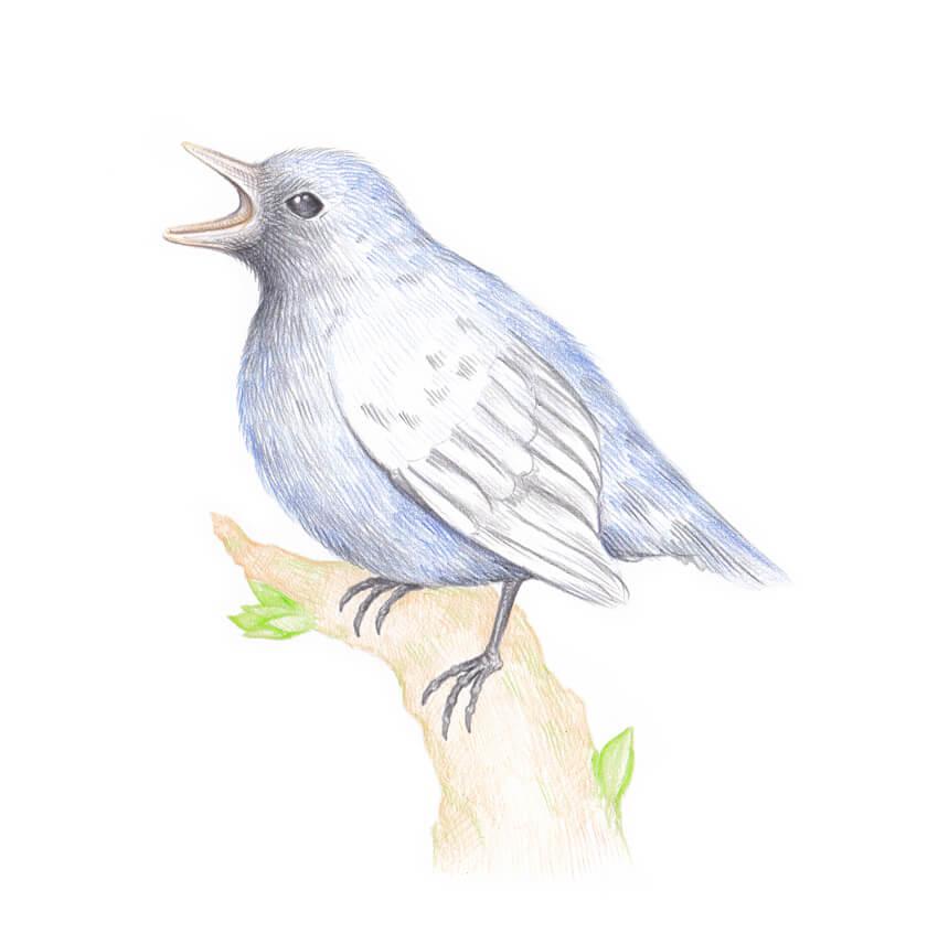 850x856 How To Draw A Bird Step By Step