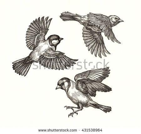 450x426 Photos Flying Bird Drawing,