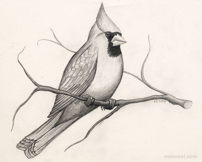 Pencil Sketches Of Cute Birds