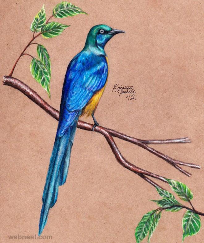 660x786 Bird Drawing 12