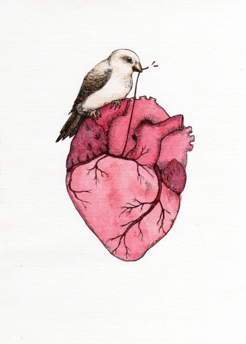 500x700 Illustration Art Watercolor Sparrow Human Heart Artists On Tumblr