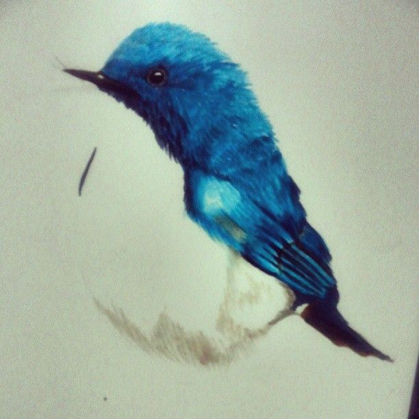 612x612 Renile On Tumblr. Little Blue Bird