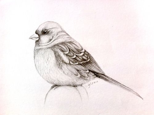 500x373 Bird Sketch Tumblr Downloads And Sketches Bird