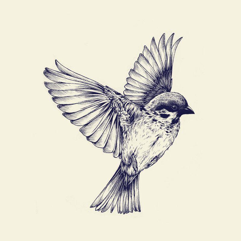 800x800 Drawing Birds Colors Tumblr