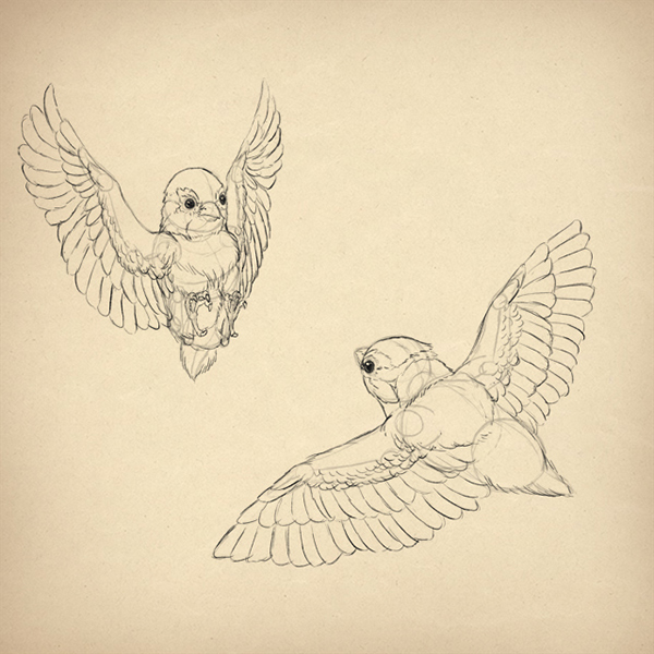 Bird Feather Drawing at GetDrawings.com | Free for personal use Bird ...