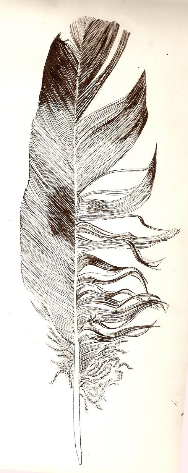 636x1600 226 Best Feathers Images On Feathers, Water Colors