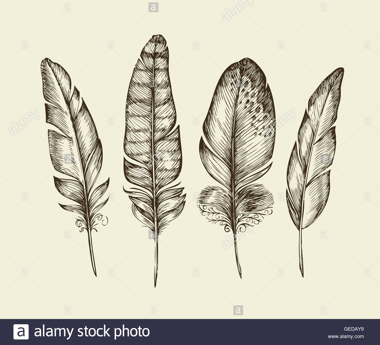 1300x1181 Hand Drawn Vintage Bird Feathers. Sketch Writing Feather. Vector