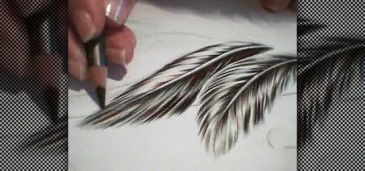 1280x600 How To Draw Feathers Drawing Amp Illustration Wonderhowto