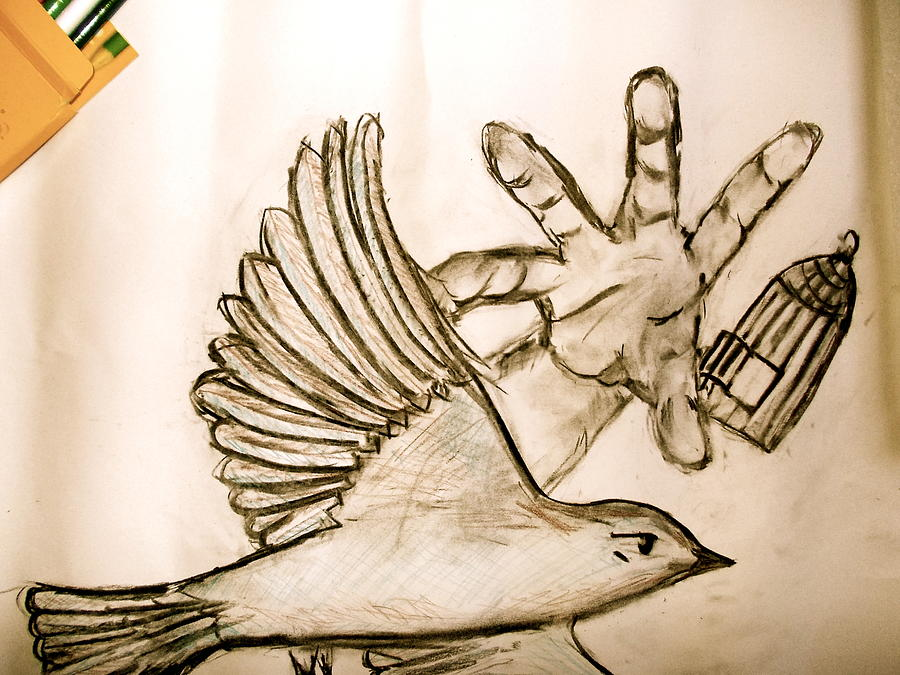 900x675 Bird And The Cage Drawing By Asharani Rohit
