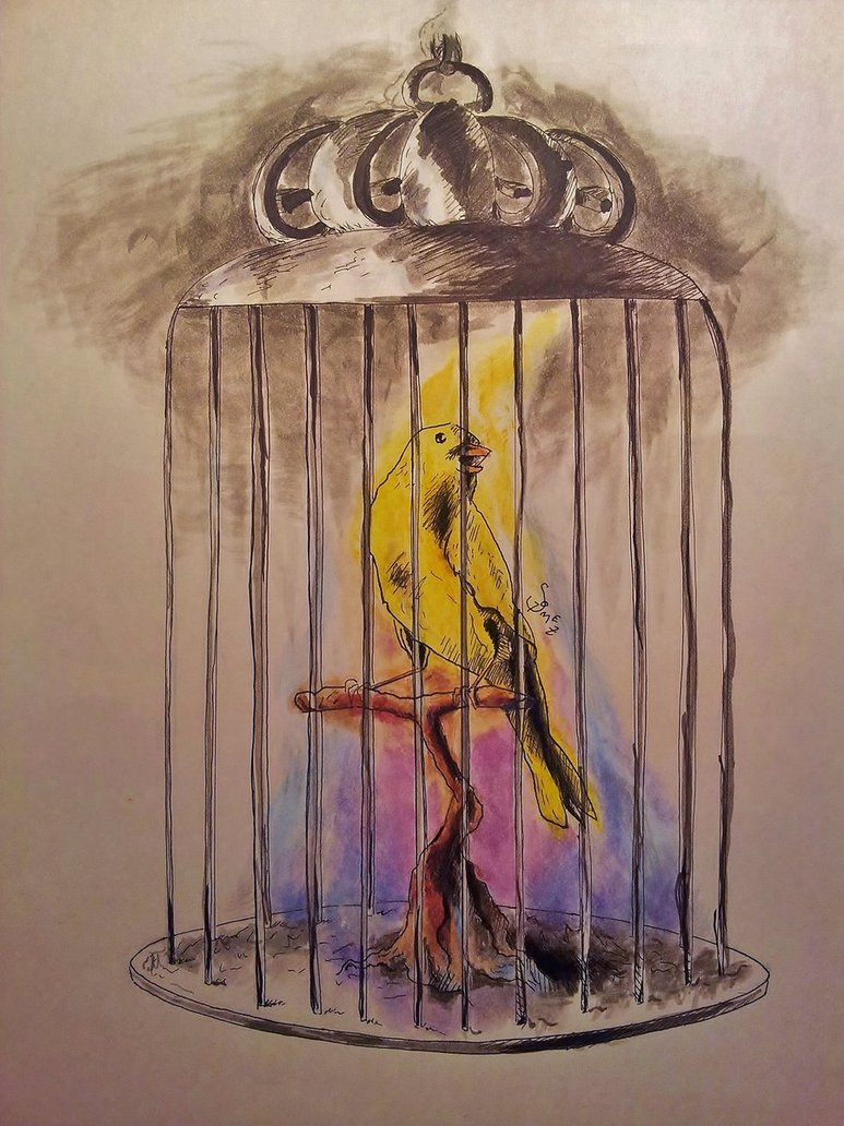 773x1032 A Bird In A Cage By Sebowebo