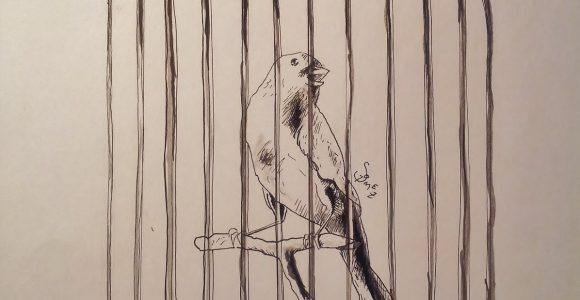 580x300 Tag Bird In Cage Drawing