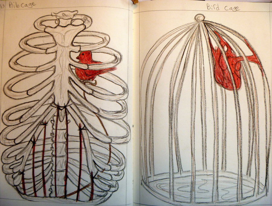 900x684 Birdcage Ribcage By Vedette9