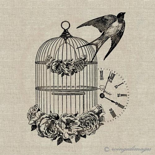 500x500 Vintage Bird Cage Drawing