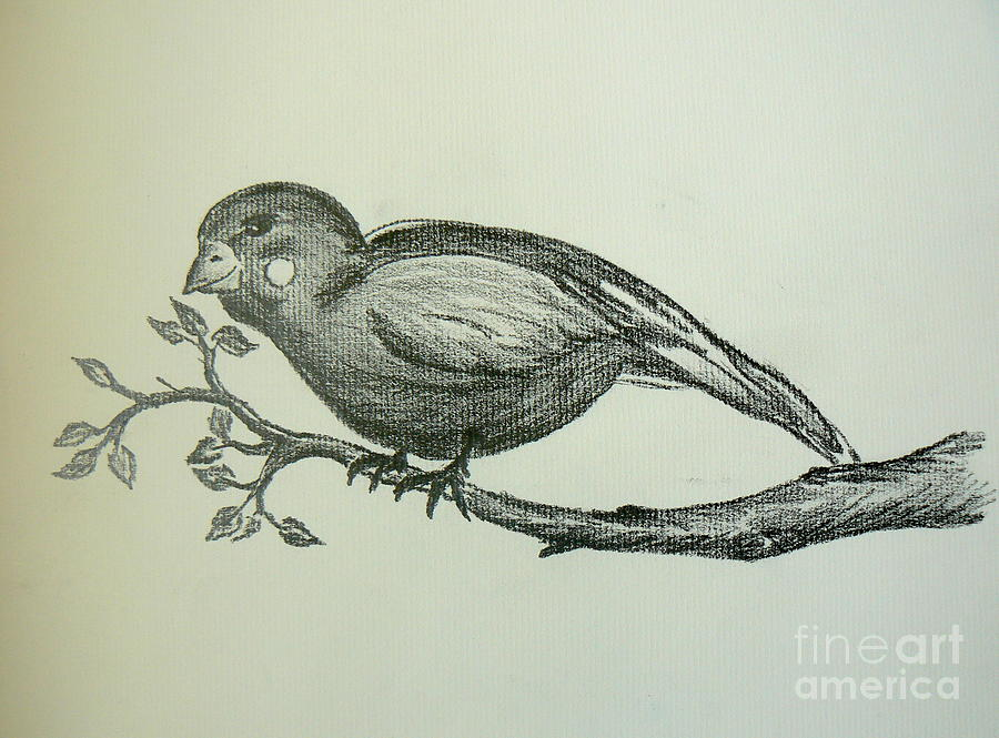 900x665 Bird On Branch Drawing By Tobi Cooper