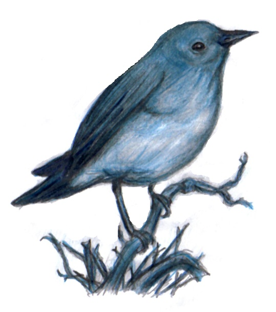 539x610 Bird On Branch