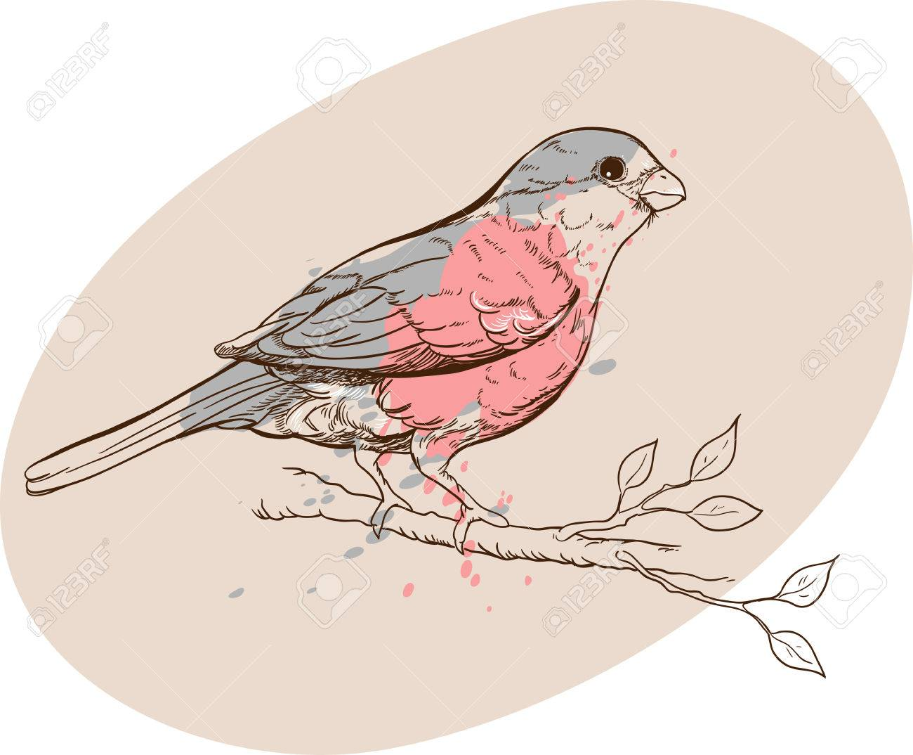 1300x1074 Vectorized Drawing Of Bullfinch Bird On A Branch In Pastel Colors