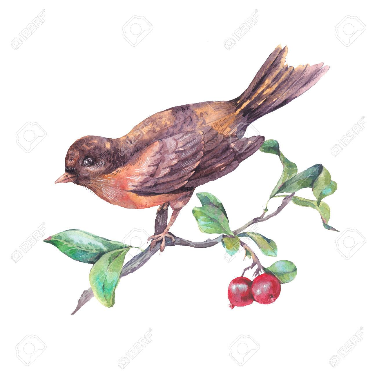 1300x1300 Vintage Hand Drawing Watercolor Card, Bird On A Branch With Red