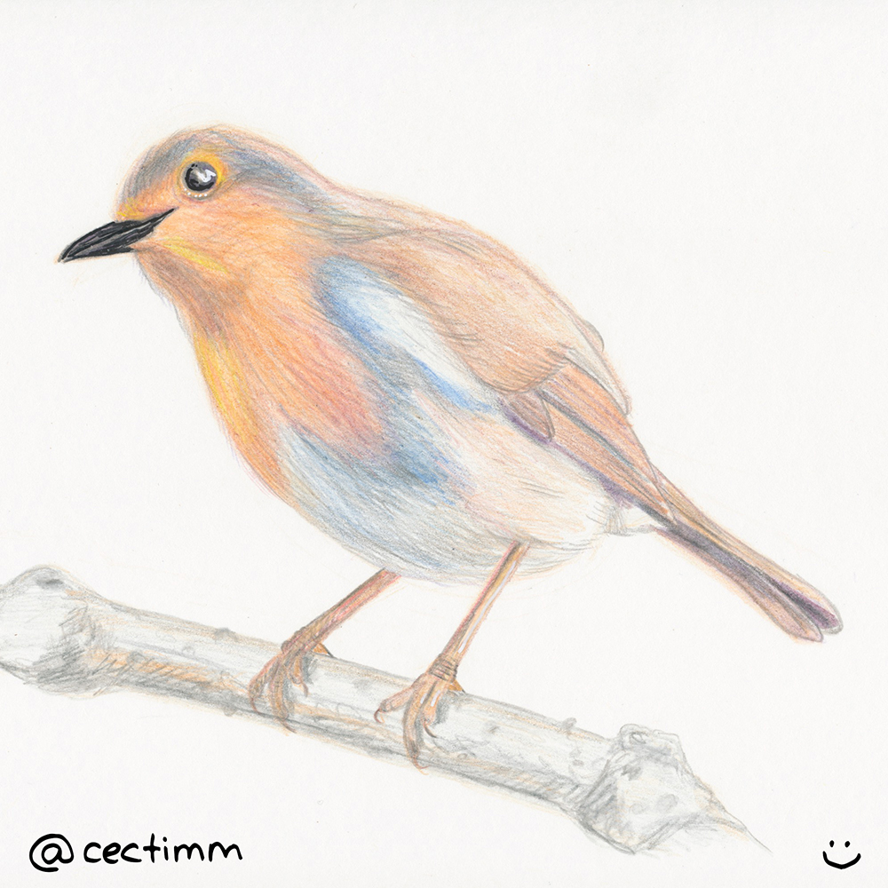 1000x1000 Drawing A Bird On A Branch