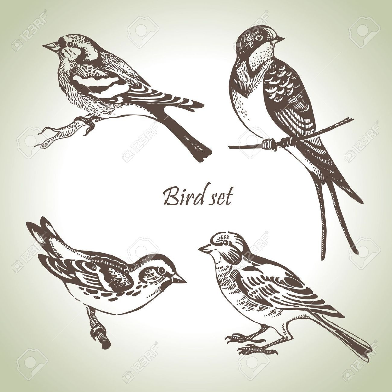 1300x1300 Two Birds On A Branch Drawing