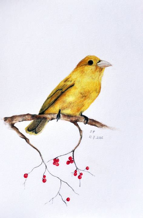 472x720 20 beautiful bird pencil drawings art ideas design trends