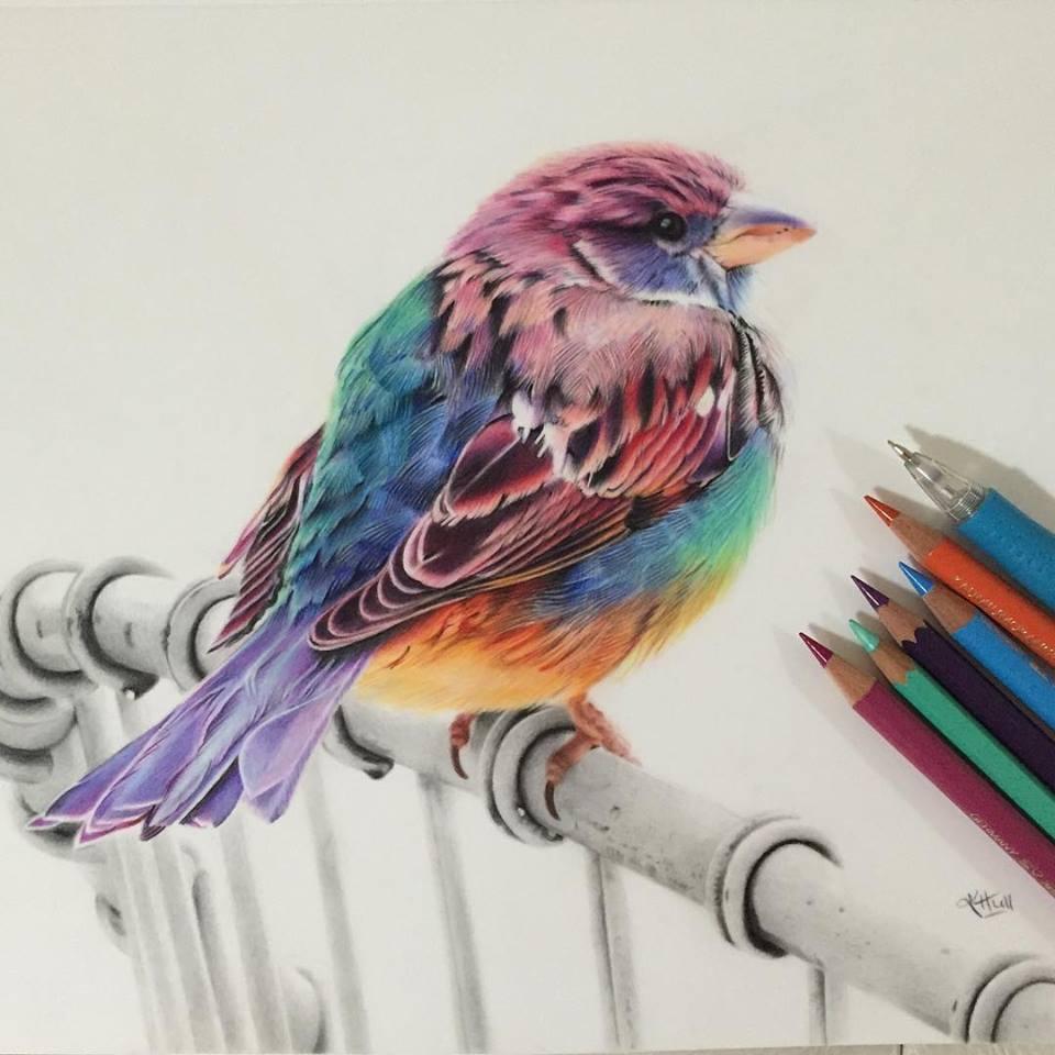 960x960 Bird Color Pencil Drawing By Karenhullart