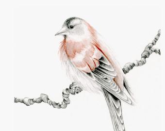 340x270 Bird Pencil Drawing Etsy