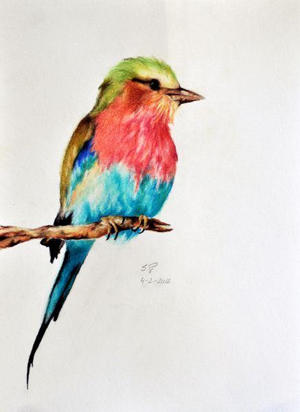 437x600 Exotic Bird 5