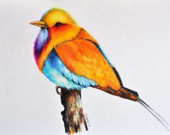 340x270 Exotic Bird 2