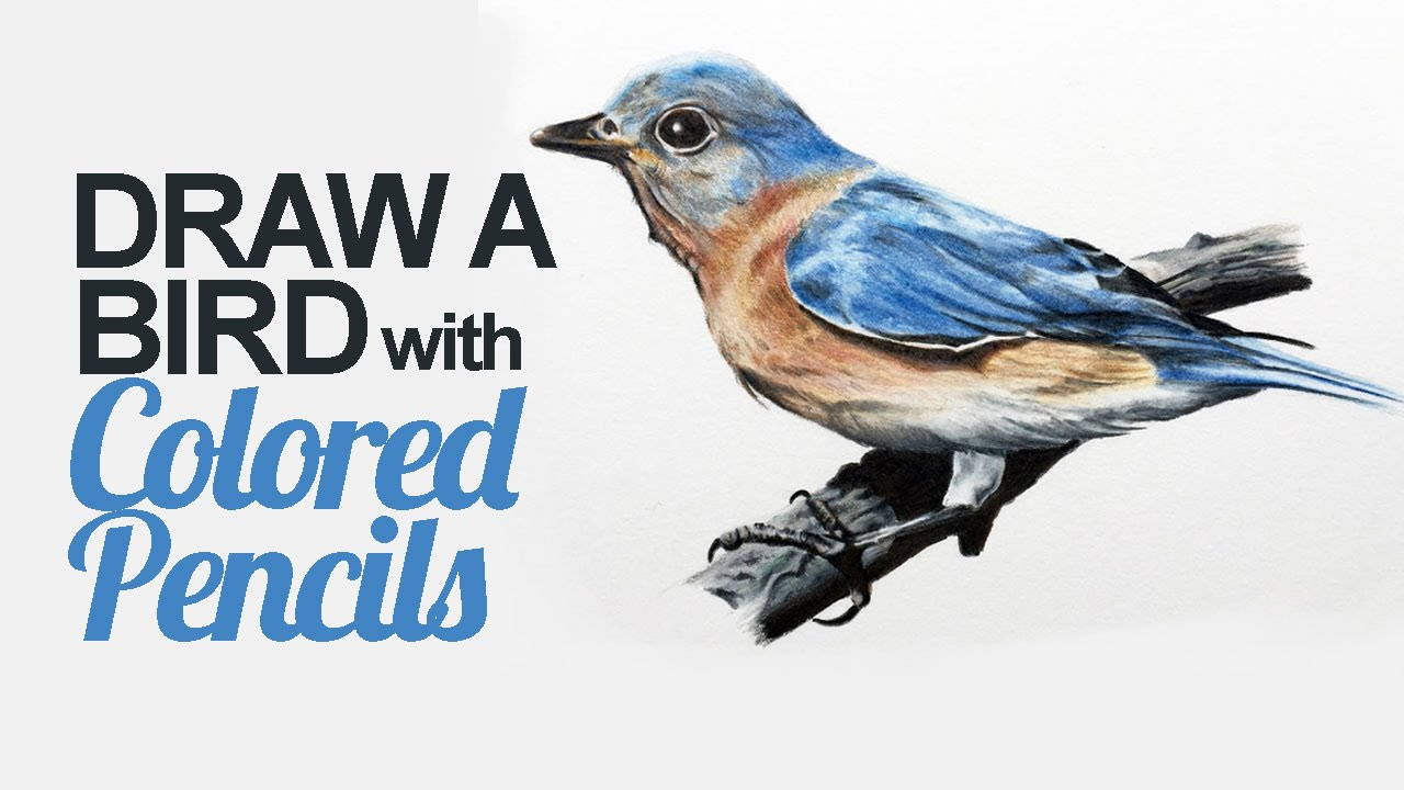 1280x720 How To Draw A Bird With Colored Pencils