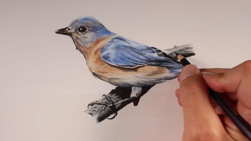 800x450 Pencil Sketch Birds