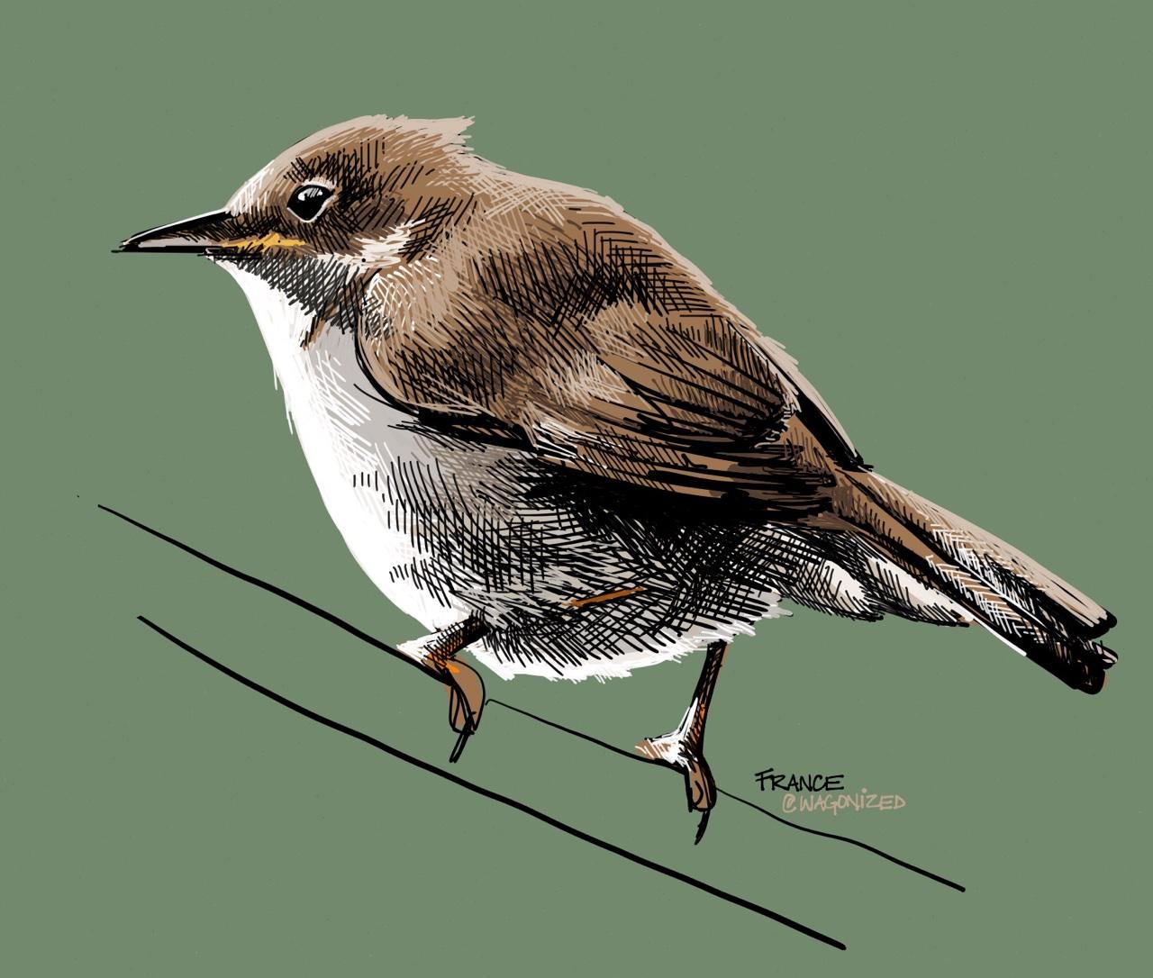 1280x1086 Beautiful Bird Pencil Drawings, Art Ideas Design Trends