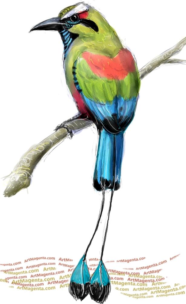 615x1004 Birds Turquoise Browed Motmot