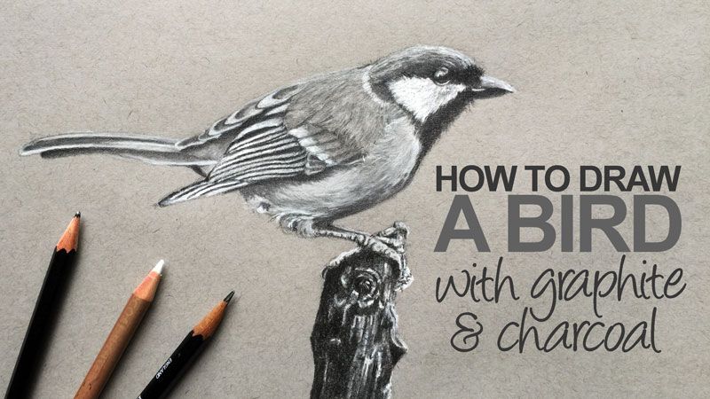 800x450 Draw A Realistic Bird With Graphite And Charcoal Pencil