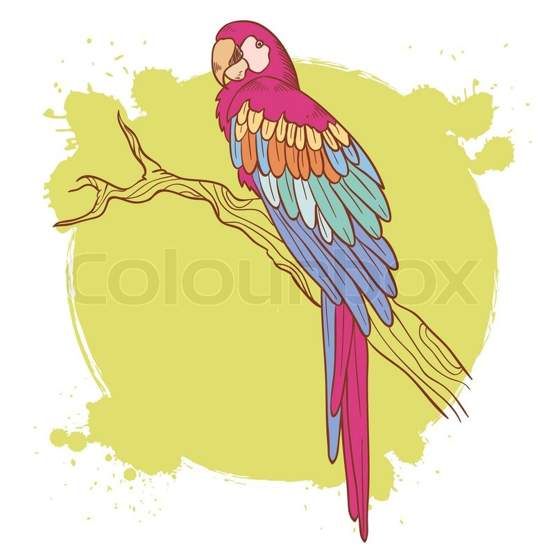800x800 Colorful Hand Drawn Ara Parrot Sitting On A Tree Branch Isolated