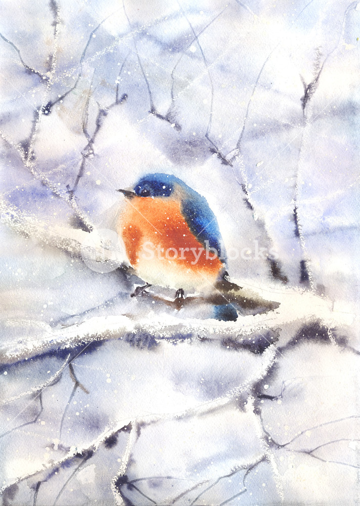 712x1000 Water Color Drawing Of A Bird Sitting On A Branch In Winter. Wet