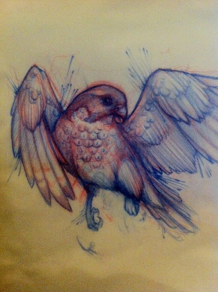 717x960 Bird Tattoo Sketch Art Tattoo Tattoo Sketch Art