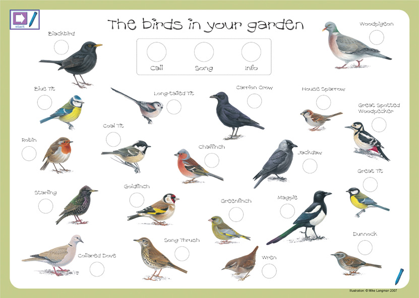831x591 Bird Identification Introduce Children To The Joy Of Bird