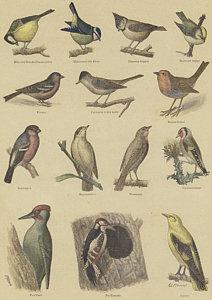 212x300 Bird Watching Drawings Fine Art America